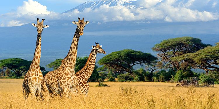 Kenia Desde